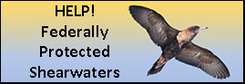 Help! Federally Protected Shearwaters