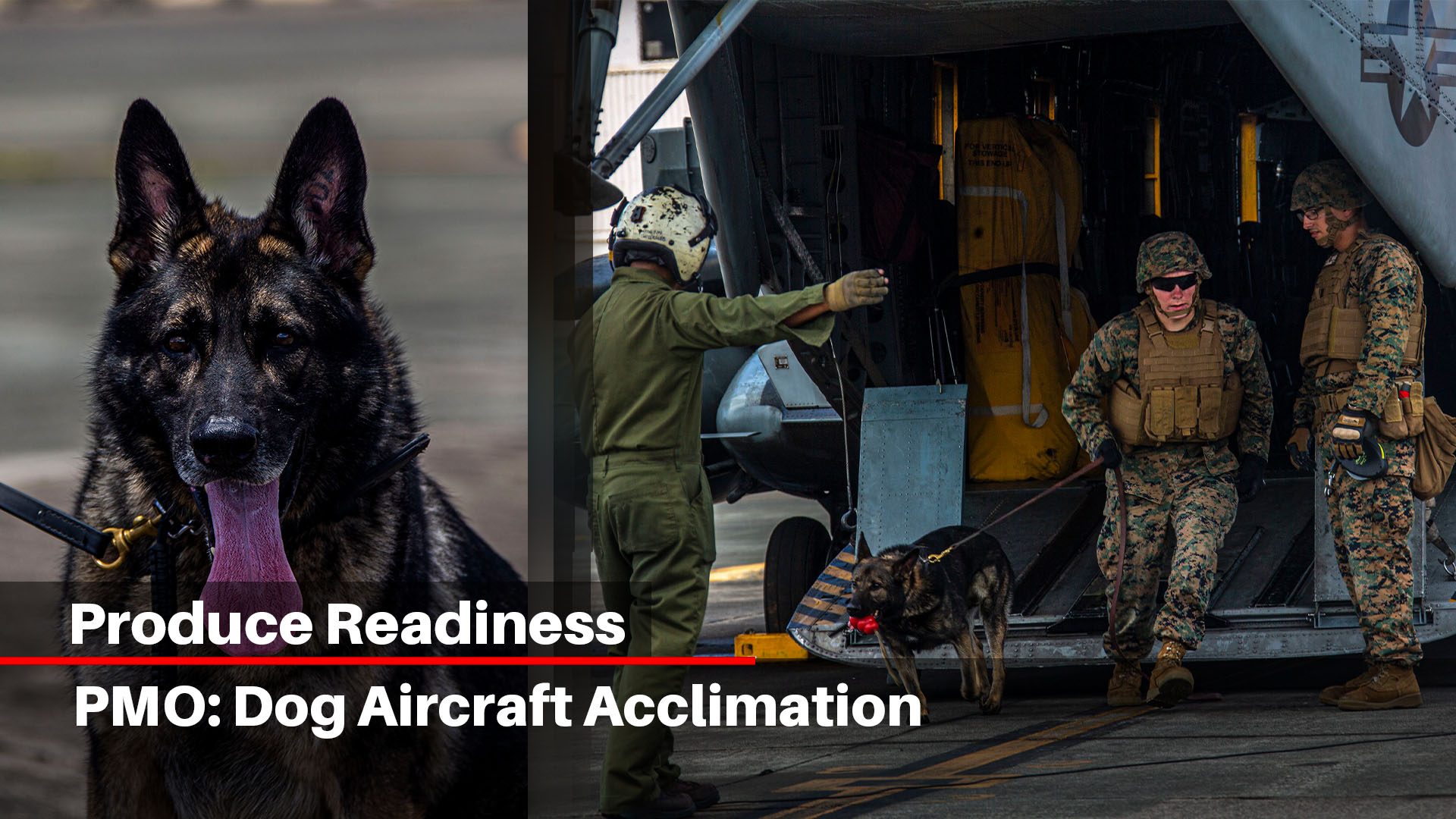 PMO: Dog aircraft acclimation