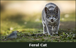 Photo of a feral cat